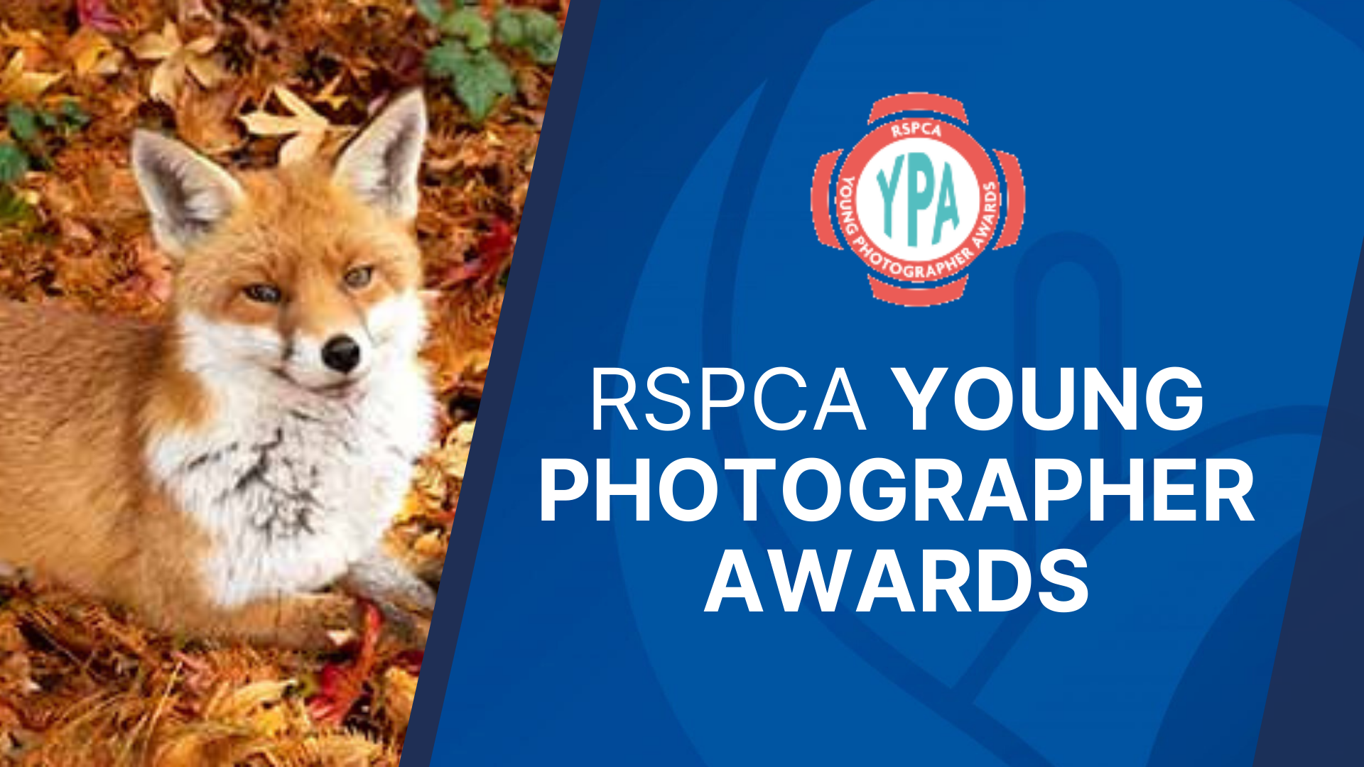 """Featured image for """"RSPCA Young Photographer Awards – closes August 2021"""""""